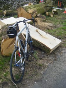 Cycling carpenter finds roadside treasure :). Completely unattended sycamore in the midst of slicing.