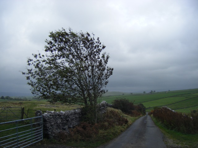 First bit of bleak autumn, the wind bending a long-suffering tree on the slog up from Great Asby to Gaythorne Plain. A headwind for me, of course.